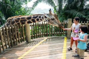 Singapore Tourist Attractions - a zoo.