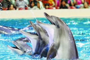 Swim with dolphins in Dubai