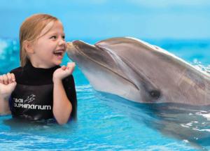 Swim with dolphins in Dubai Dolphinarium