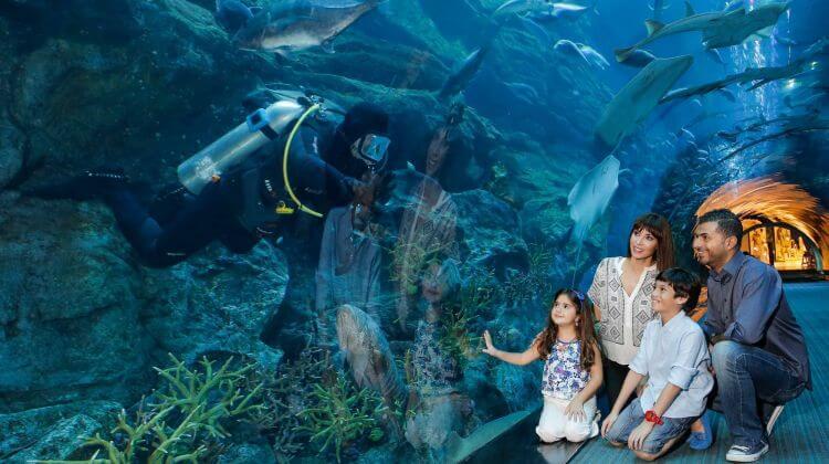 Dubai Aquarium is one of the open Dubai activities