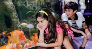 Dubai Aquarium and Underwater Zoo kids attractions in dubai