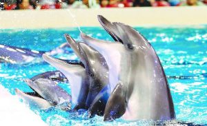 Dubai Dolphinarium is one of the places to visit post COVID-19