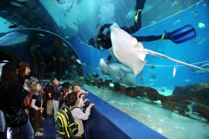Sharjah Aquarium is one of the places to see in Sharjah