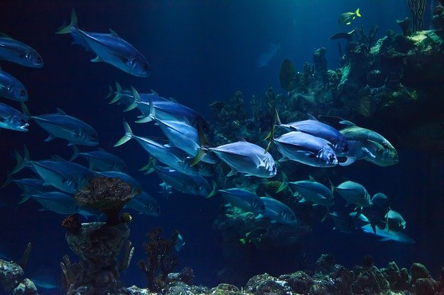 marine life Singapore