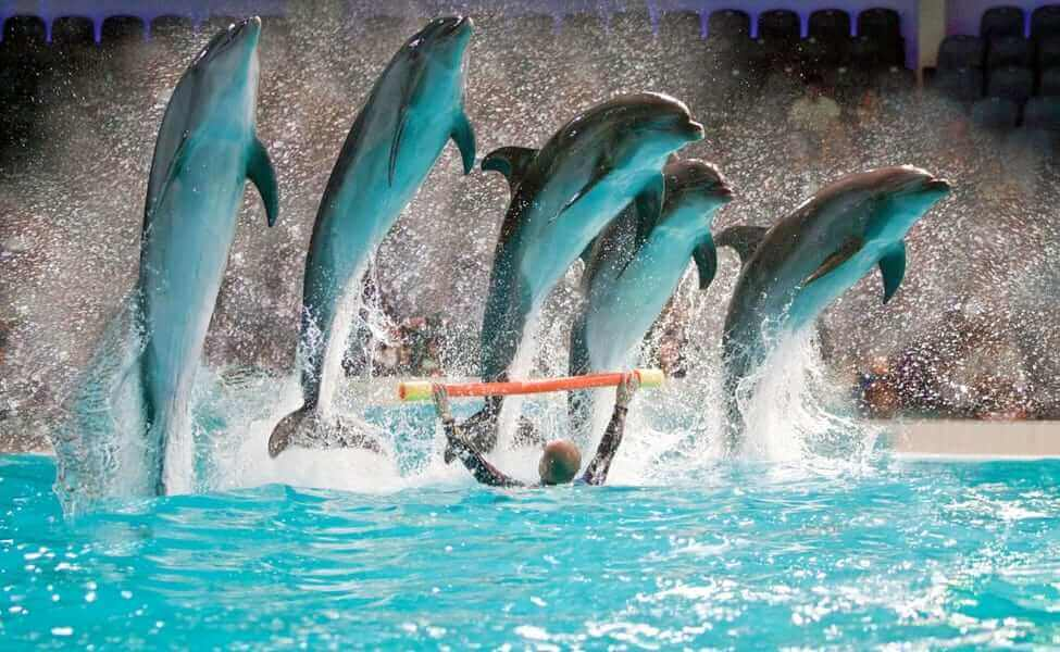 Dubai Dolphinarium is one of the attractions opened post Covid-19