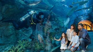Dubai Aquarium And Underwater Zoo is one of the best family winter attractions in dubai