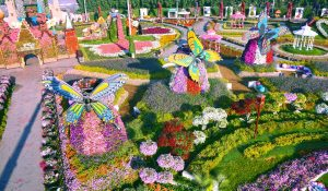 Dubai Miracle Garden is one of winter attractions in dubai