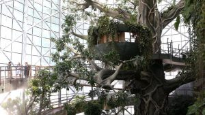 The Green Planet Dubai is one of the top attractions in UAE