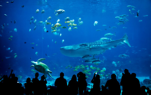 Aquarium in Kuala Lumpur