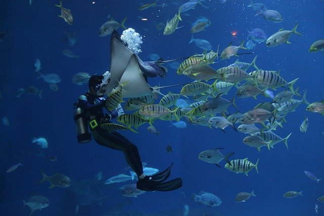 SEA Aquarium Singapore: All you need to know